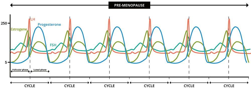 Wieder menopause blutungen plötzlich Wechseljahre: Blutungen